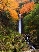 Waterfall of foliage endowment Stock photo [2010888] Waterfall