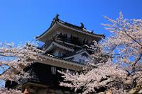 Hamamatsu Castle castle tower and cherry Stock photo [2012112] Shizuoka