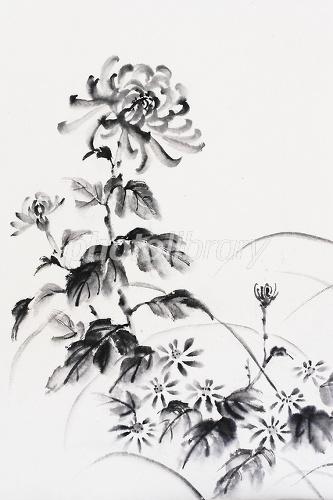 菊 水墨画 イラスト素材 2123038 フォトライブラリー Photolibrary