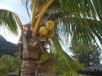 Palm tree Stock photo [2115574] Palm