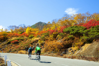 I enjoy a road bike in Norikura of autumn leaves Stock photo [2120705] Road