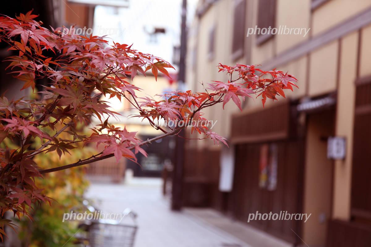 京都 祇園 紅葉