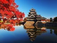 Autumn leaves of Matsumoto Castle Stock photo [2220008] Matsumoto