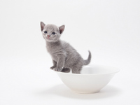 Kitten that has entered the white vessel Stock photo [2221684] CAT
