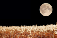 Full moon and pampas grass Stock photo [2225505] Full