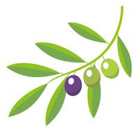 Olive [2227797] Olive