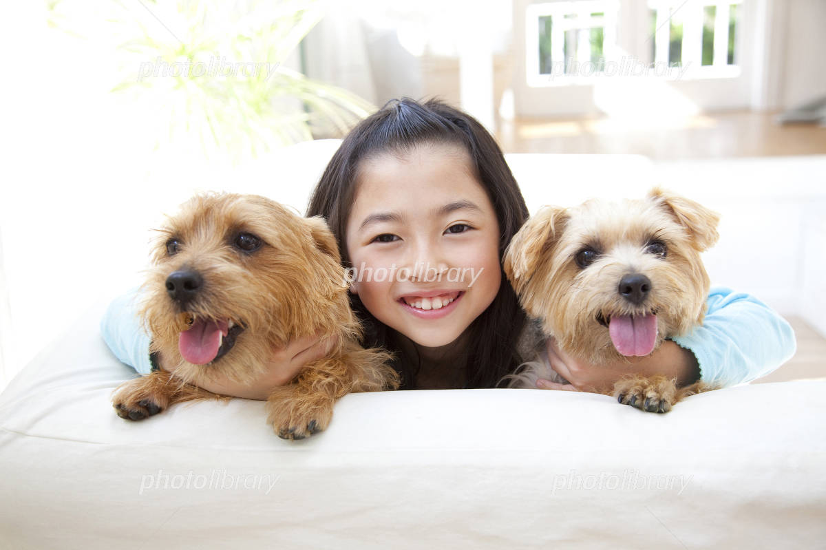 Girl of Norfolk terrier two dogs and smile Photo