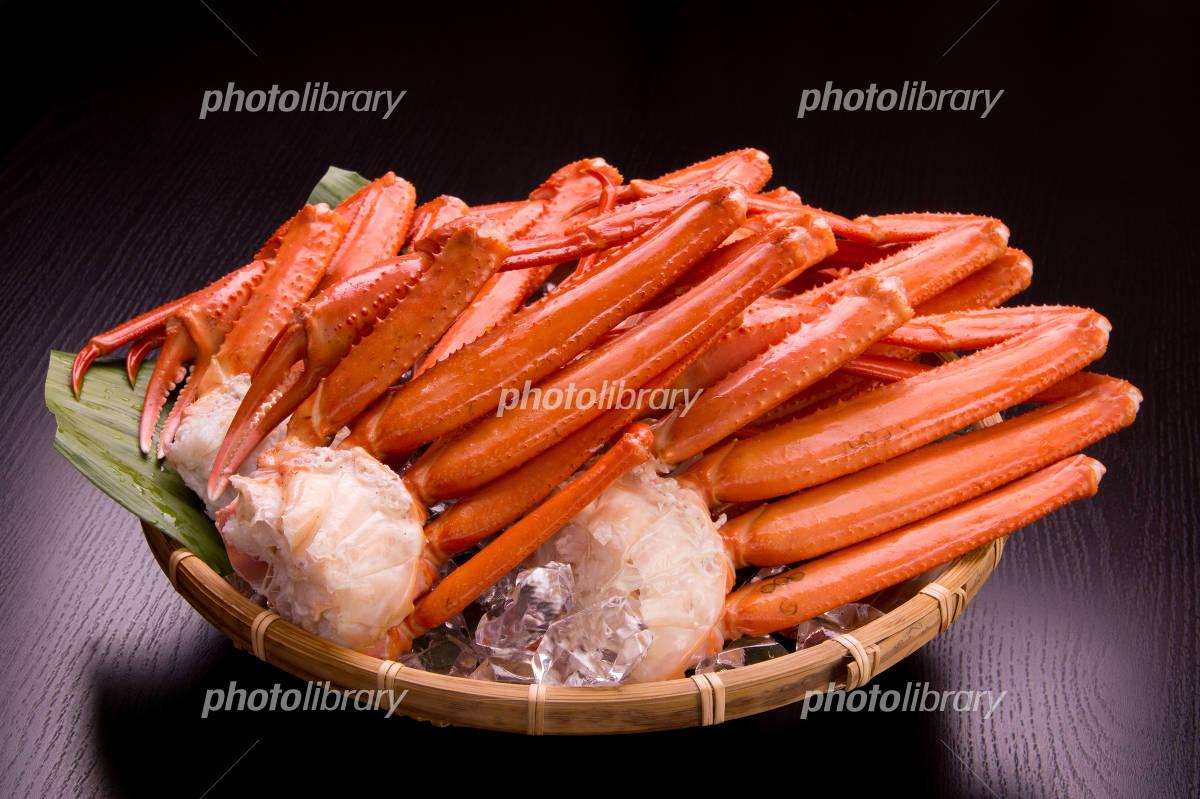 Boyle snow crab Photo