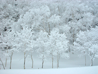 Snow scene Stock photo [2345051] White