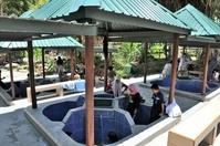 コタキナバル ポーリン温泉