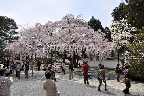 京都 醍醐寺 三宝院の憲深林苑 ...