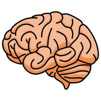 Brain [2473647] Brain