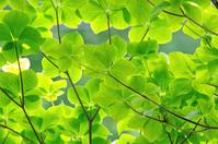 Fresh green Stock photo [2479984] Fresh