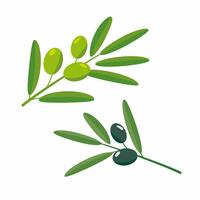 Olive [2595891] Olive
