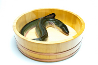 Natural eel Stock photo [2596953] Eel