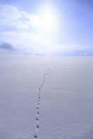 Snowfield and sun with footprints Stock photo [2597513] Asia
