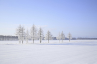Snowy field rime Stock photo [2597602] Rime