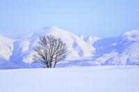 Snowy trees and Tokachidake mountain range Stock photo [2597658] Asia
