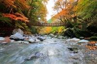 Autumn leaves and Kazurabashi Stock photo [2599136] Kazurabashi