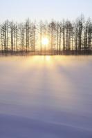 Snowy field Asahi Stock photo [2600089] Winter