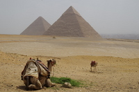 Pyramids and camel in Egypt World Heritage Stock photo [2603983] Pyramid