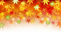 Maple background autumn [2606667] Maples