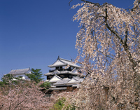 Castle tower and weeping cherry tree Stock photo [2609590] March