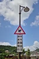 猫に注意の標識