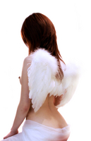 wings sit Stock photo [79474] Angel
