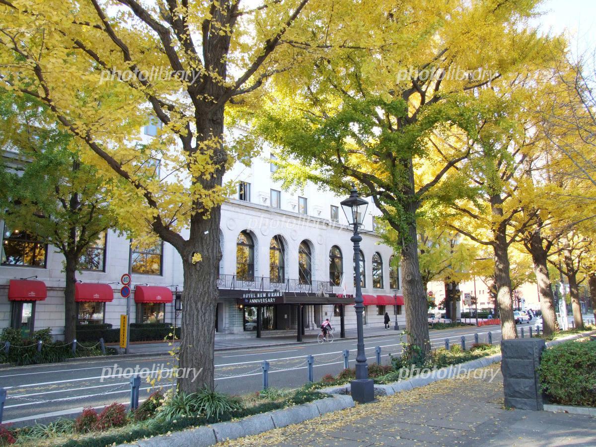 秋の横浜山下公園通り 写真素材 ...