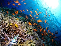 Tropical coral reef and lots of tropical fish Stock photo [2783210] Southern