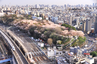 Sakura prince Station cityscape view of Asukayama park Stock photo [2868598] Spring