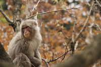 Resting in the Japanese monkey cherry Stock photo [2945545] Curious