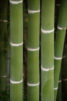 Bamboo forest Stock photo [2952481] Bamboo