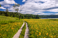 Oze-Oe wetlands of day lily Stock photo [2953245] Oe