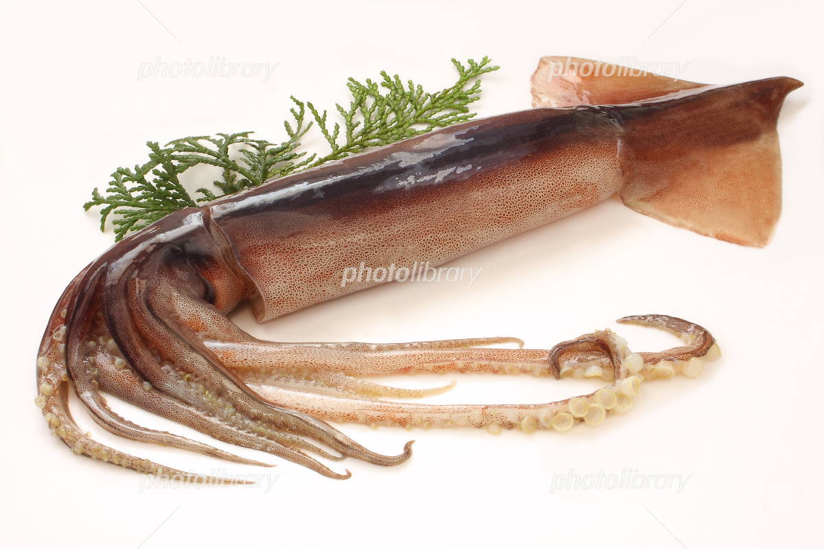 Squid raw white background Photo
