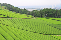 Cityscape of Oigawa tea plantation of Makinohara plateau Stock photo [3028460] Makinohara