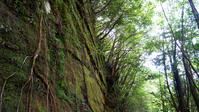 World Heritage Yakushima of moss Stock photo [3030691] Yakushima