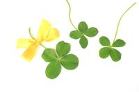 Four-leaf clover Stock photo [3113378] Clover