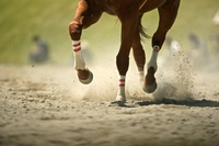Umanoashi you run the dirt Stock photo [3116880] Horse