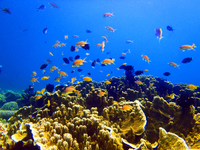 Fish that flock to coral Stock photo [3120158] Coral