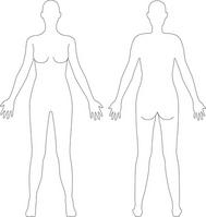 Human body illustrations (woman) [3120797] Human
