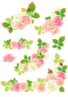 Rose [3120782] Rose