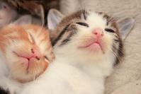 Kitten sleeping with two dogs Stock photo [3215200] Kitten