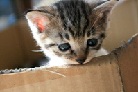 CAT Stock photo [3217354] CAT