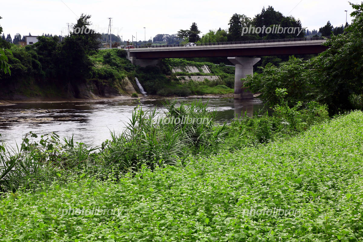 最上川長島橋 写真素材 [ 3318030 ] - フォトライブラリー photolibrary
