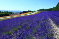 Of Farm Tomita lavender fields Stock photo [3317817] Fields