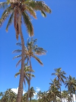 Palm tree Stock photo [3321027] Palm