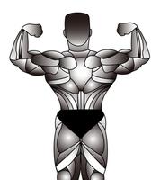 Bodybuilding [3322620] Bodybuilding