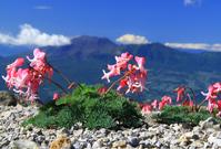 Mt. Asama Stock photo [3326018] Comix